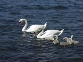 Статусы про идеальную семью